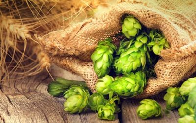 The Great Hops Debate